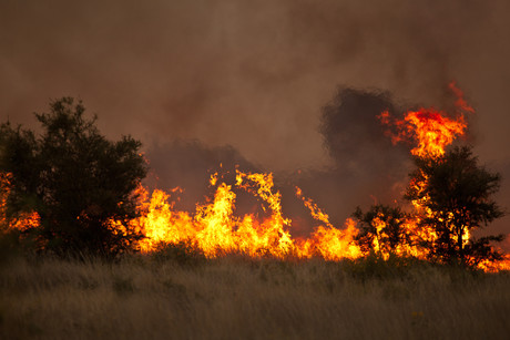States of Emergency declared as NSW and Qld burn | Safe-T-Bulletin | NSCA Foundation